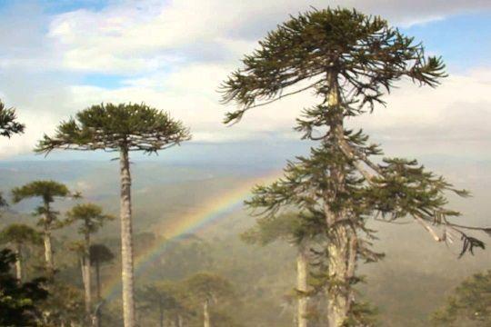 Cordillera de Nahuelbuta.