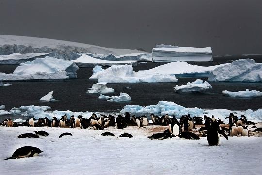 Paisaje antártico.