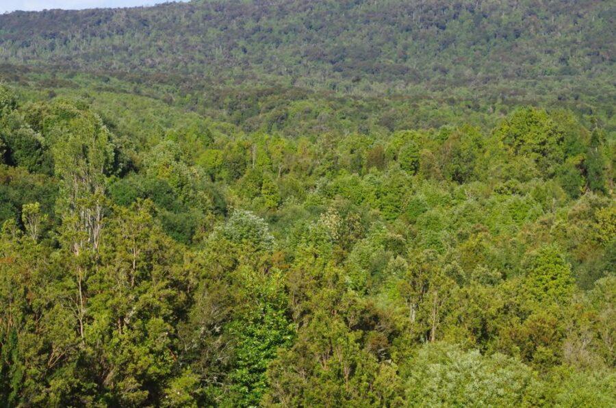 Humedales Costero de Totoral y Parque Katalapi