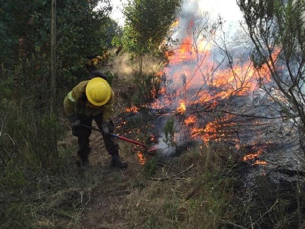 incendios forestales / mega incendios
